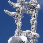 Des rencontres insolites: bonhommes de neige faisant leur gymnastique matinale