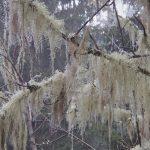 Forêt des lutins